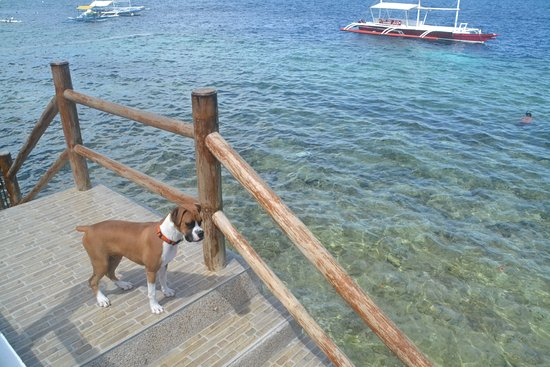 Il Sogno: My puppy enjoying also her stay there...