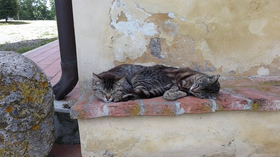 Ponsacco, Italia: und es gibt Katzen, neben dem Hund und den Eseln... und Hühnern...