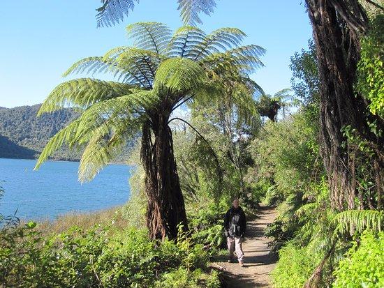 Standing beneath a tree fern beside the Blue lake