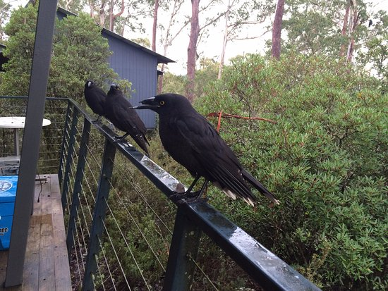Cradle Mountain Wilderness Village: please dont feed the animals , this is what can happen to bird's beaks