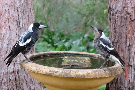 Llewellin's Guest House: Morning chorus at the birdbath
