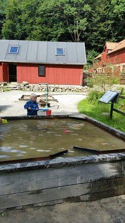 Randboel, Dinamarca: 20160802_152653_large.jpg