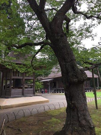Motsu-ji Temple: photo0.jpg