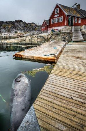 Oqaatsut, Groenlandia: Friske råvarer foran Restaurant H8