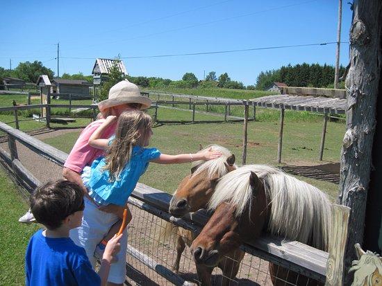 Egg Harbor, WI: Feeding ponies at Plum Loco