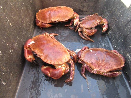 Korshamn, Norge: buurjongen verkoopt krabben voor Kr 10