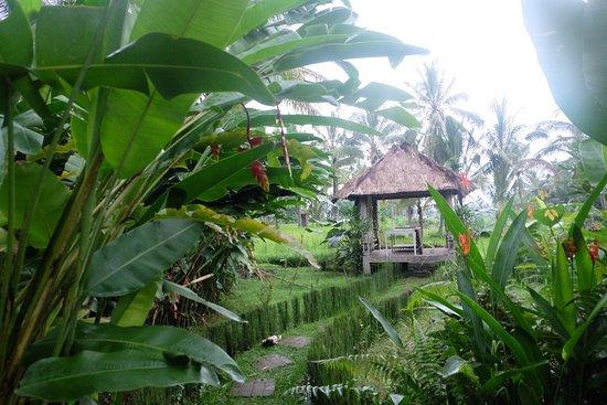 Hati Padi Cottages: photo8.jpg