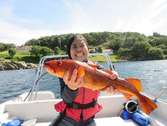Korshamn, Norge: mooi gekleurde kabeljauw uit het kelpwier