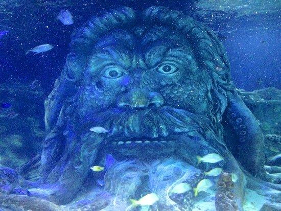 Underwater Tunnel Picture Of Sea Life Charlotte Concord