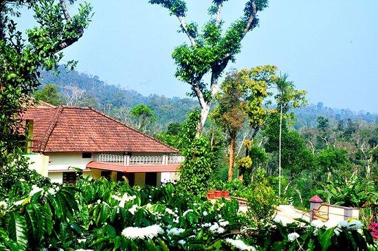 Landscape - Picture of Blossom Homestay, Virajpet - Tripadvisor