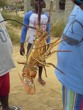 Cabo Ledo: CaboLedo2015_fresh lobster