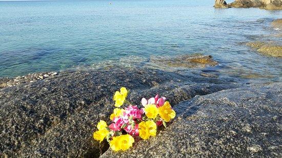 Agios Prokopios, Grecia: un pò di poesia fiori sugli scogli