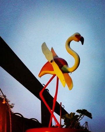 Cantina Caramba: Flamingo's in the wind.
