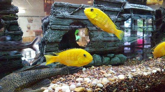 Skaneateles, Nova York: Fish tank