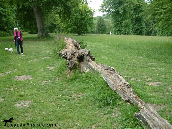 River, UK: Log