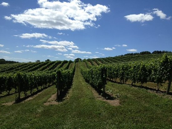 Middleburg, Pensilvania: Vineyards on a clear day