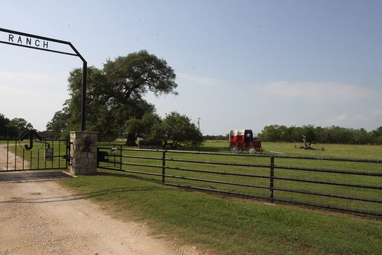 Gonzales, TX: Sam Houston Oaks lies on the grounds of the Historic Braches House