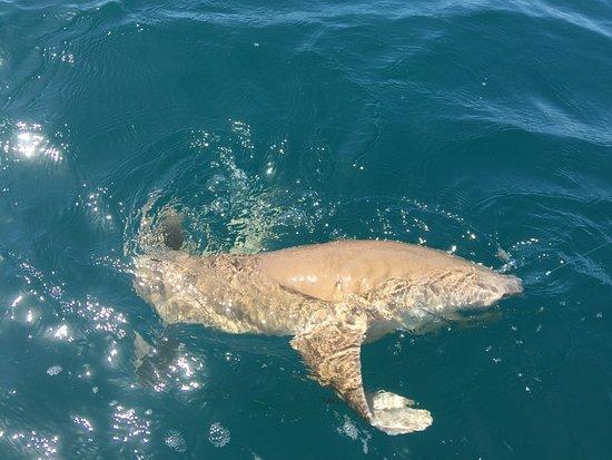 Fishing Sarasota Florida - Day Tours: photo0.jpg