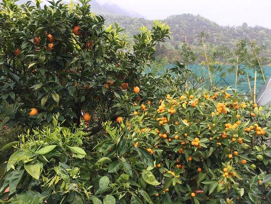 Botanischer Garten Gambarogno