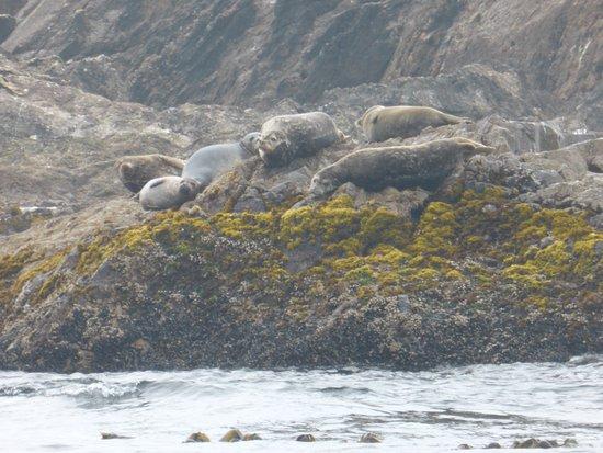 SpyHop Ocean Adventures: Seals basking on the rocks