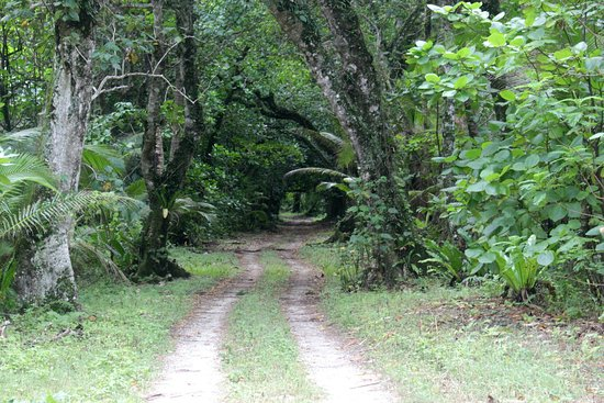 Atiu Villas: Atiu Roads_large.jpg