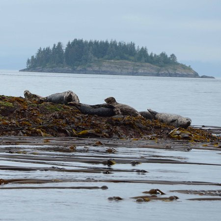 Alert Bay, Canadá: Sea Lions