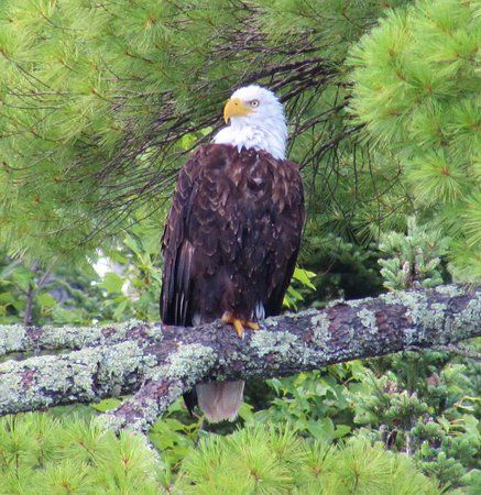 Crane Lake, MN : Wonderful wildlife photo ops with eagles, loons, otters and more!