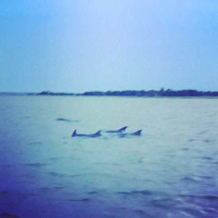 Captain Mike's Dolphin Tours: I was actually surprised at how many dolphins we saw. This was just one group.