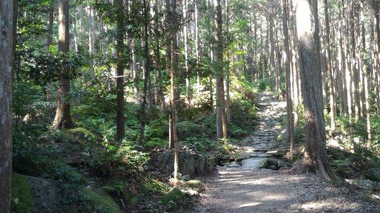 Kumano Kodo Magose Pass