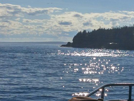 Whale Cruises on the Julien Cloutier Enr.