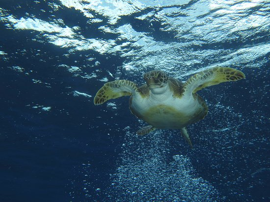 Fish Eye Photo: One of The Bonaire Locals