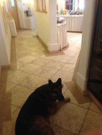 Hotel Antines: beware the dog