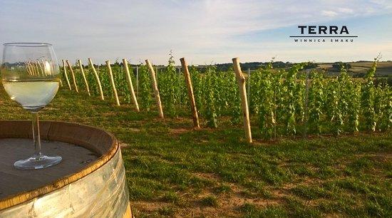 Terra Winery