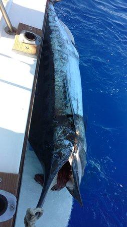 Mariah Sportfishing Charter Boat