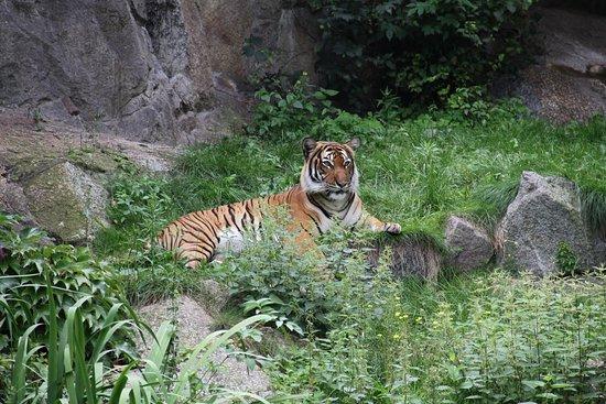 Garten berlin  Zoologischer Garten (Berlin Zoo) - Berlin Zoological Garden ...