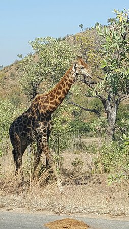 Bono Tours and Safaris - Picture of Kruger National Park