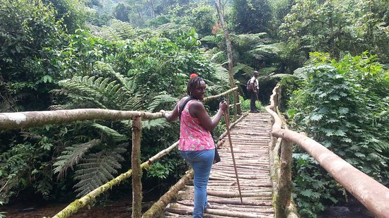 Nkuringo Bwindi Gorilla Lodge: Crossing a river in the forest