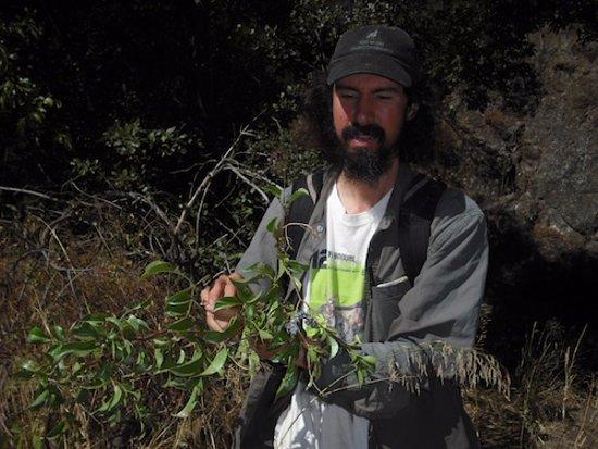 Silverado, CA: Joel Robinson on a foraging adventure.