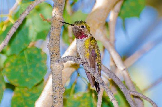 Estes Park KOA: Hummingbird Feeders in the patio area
