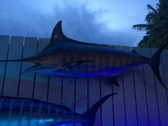 Bimini Big Game Club Resort & Marina: photo2.jpg
