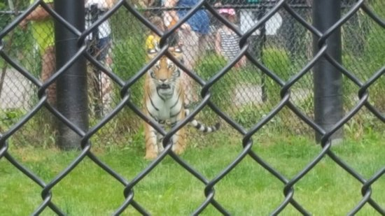 Magnetic Hill Zoo: 20160727_131254_large.jpg
