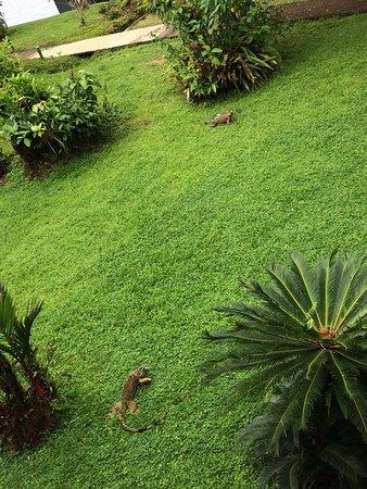 Tortuga Lodge & Gardens: photo2.jpg