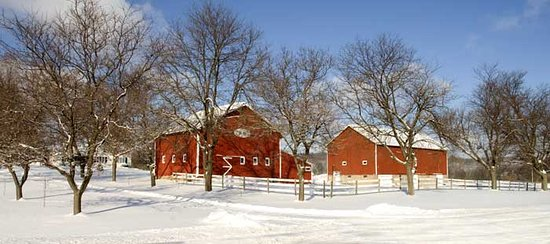Springdale Farm Bed & Breakfast: winter wonderland