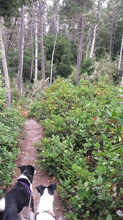 Cloverdale, OR: Clay Myers Natural Area trail through Huckleberry and Salal overgrowing sand dunes.