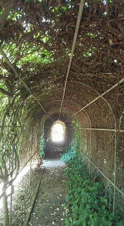 Pebble Hill Plantation: arbour in the garden nest to hedge maze