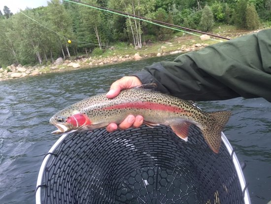 Rossland, Canadá: Wild rainbow on the Columbia