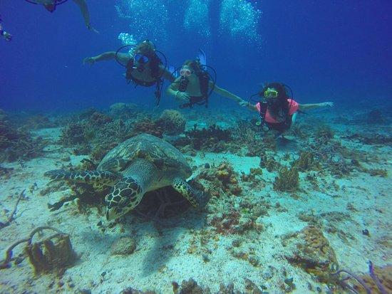 Sea Robin Cozumel: Fun day diving with Sea Robin