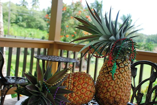 Pahoa, HI: White (sugarloaf) pineapples.
