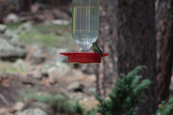 The Arboretum at Flagstaff : photo1.jpg