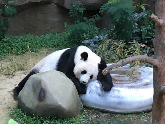 Senyum Zoo Negara